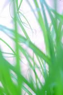 Allergien-Entstehung, Nachweis und Behandlung