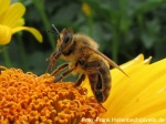 Was tun bei Allergien gegen Insektengifte?