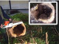 Bild Baumsicherheit - Wir pr�fen Ihren Baumbestand